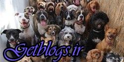 تصاویر) + مسابقه گزینش زشتترین سگ دنیا (