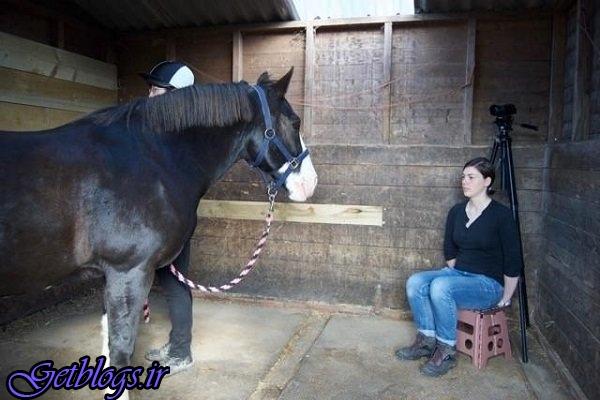 اسب ها افرادی که قبلا دیده اند را به خاطر می آورند