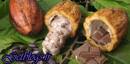 تلاش دانشمندان جهت جلوگیری از انقراض شکلات