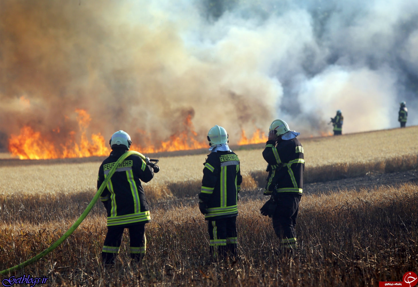تصاویر) + پرندهای که یک مزرعه را به آتش کشید! (