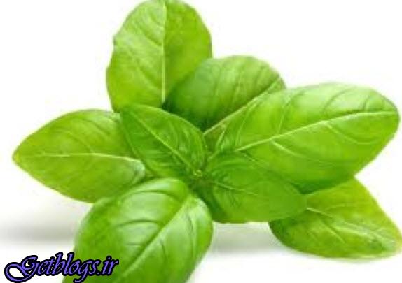 گیاهانی که فشارخون را کم کردن میدهند