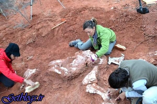 عکس + کشف فسیل دایناسورهای عظیم الجثه