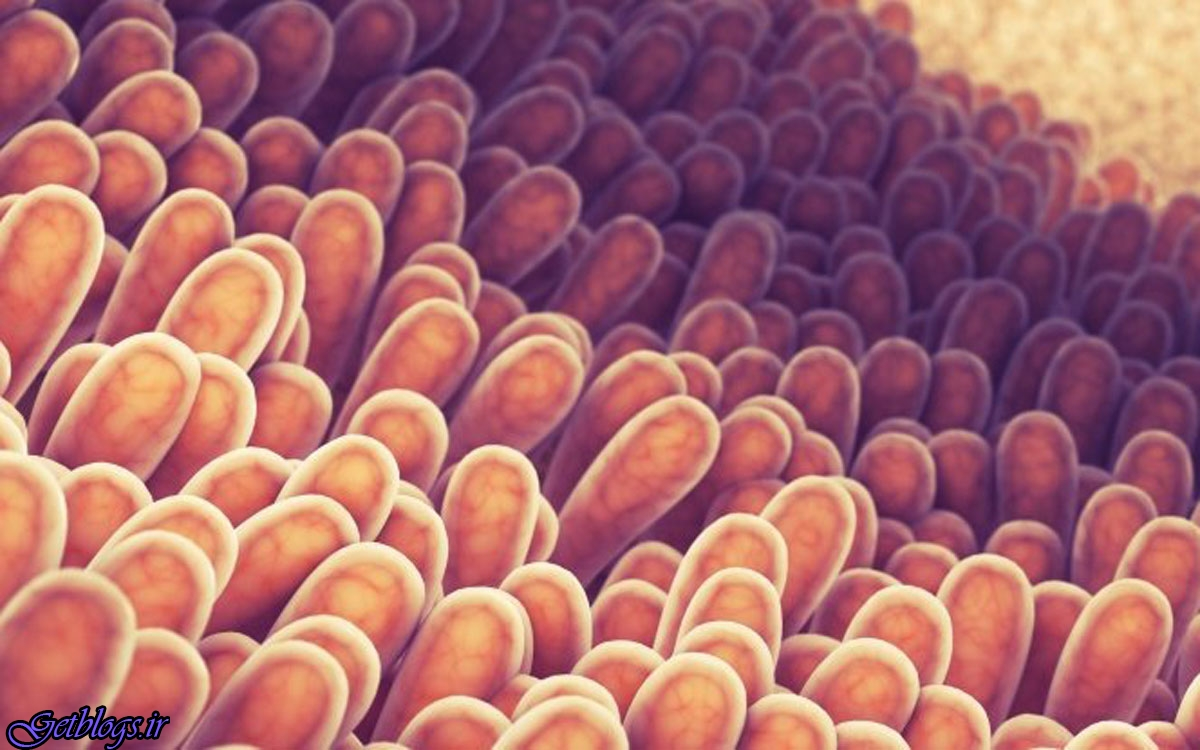 میکروبیوم روده درکاهش بیماری های قلبی نقش دارد